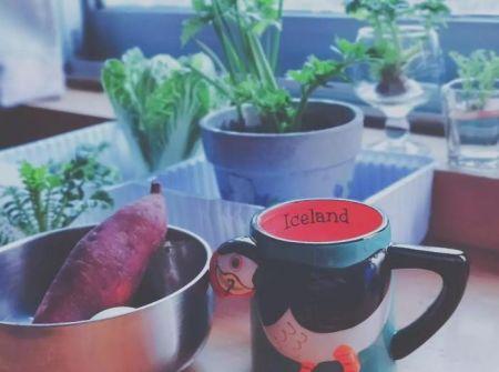 """""""封城""""第一天开始养的蔬菜绿植和每天简单的早餐"""